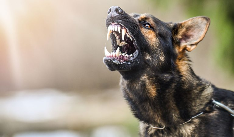 10 Could-Be Vicious Dog Breeds From Around The World