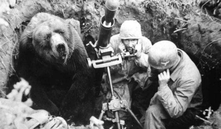10 Incredible Details Surrounding Wojtek The Bear, Who Became A World War II Hero